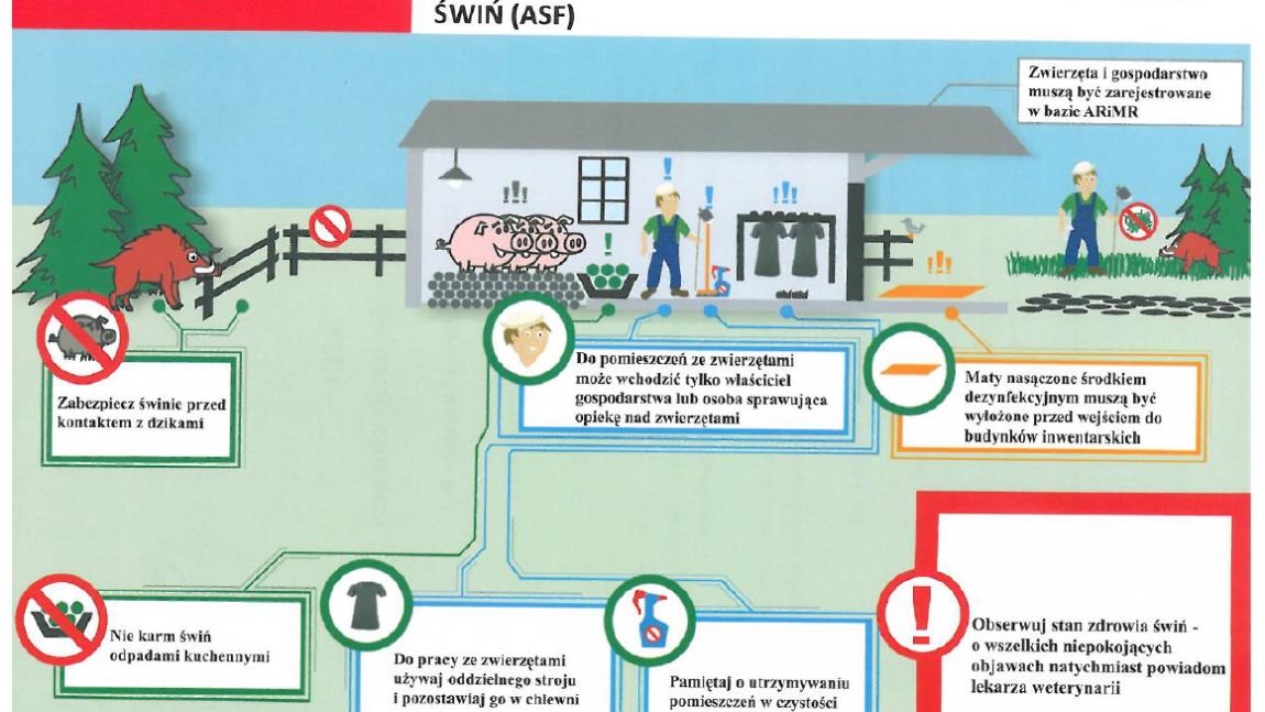 Informacja w sprawie zasad przemieszczania świń na obszarach zapowietrzonym i zagrożonym, wyznaczonych w związku z wystąpieniem ogniska afrykańskiego pomoru świń (ASF)